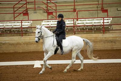 Horse 209