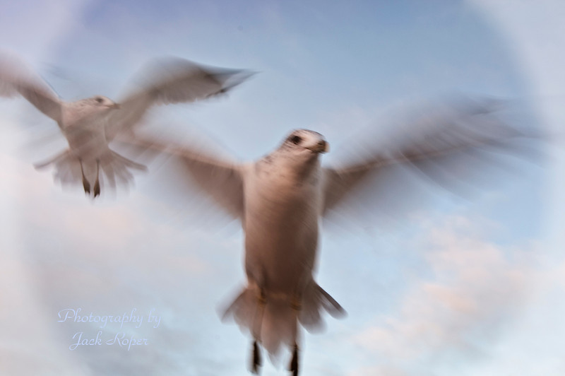 Sea Gulls in the sun .jpg