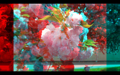Flowers in 3D Anaglyph with Fugi W3