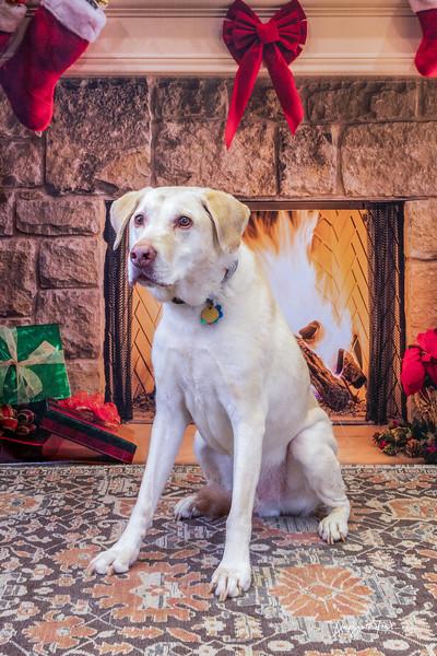 Christmas Pet Photos 12/7/2019