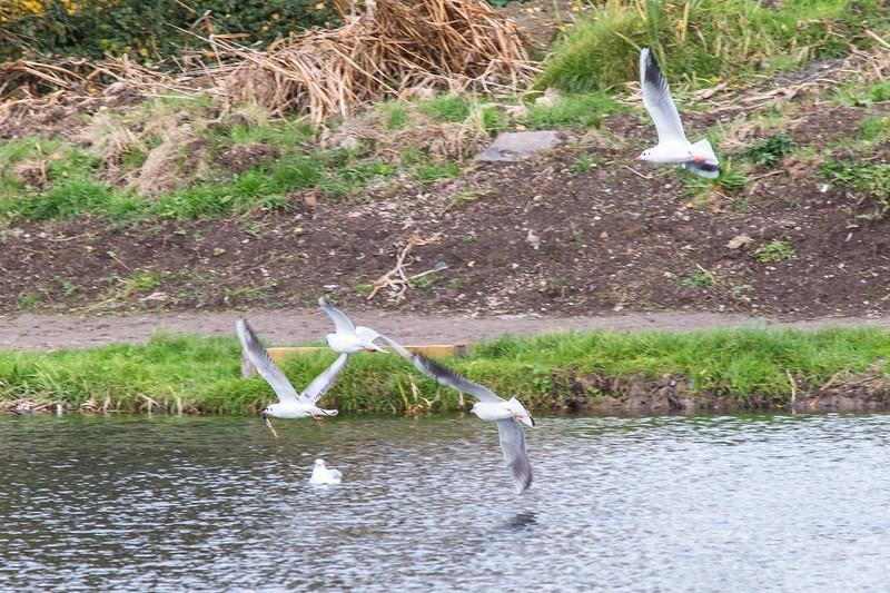 Lliswerry Pond & Park -15.jpg