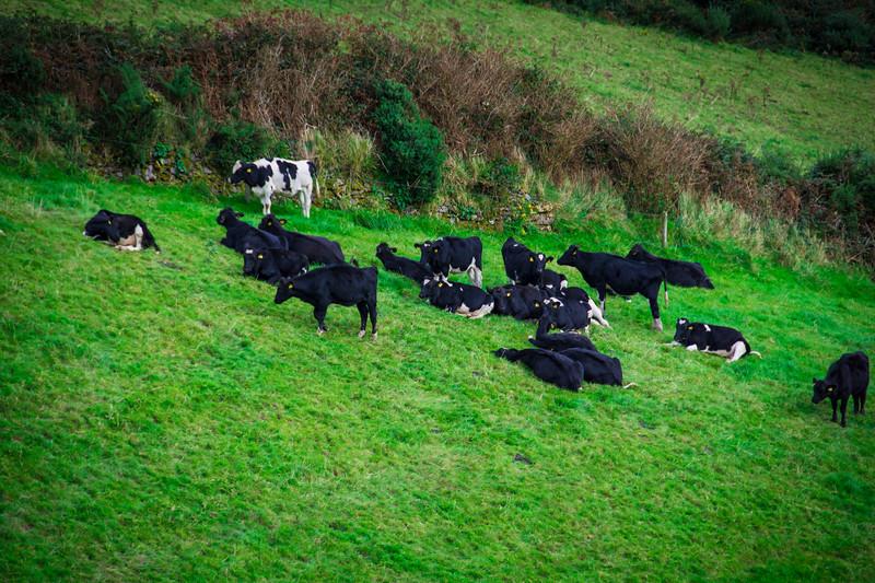 Ireland104.jpg