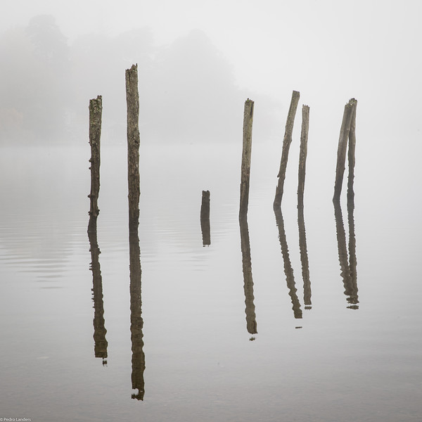 Posts and Mist