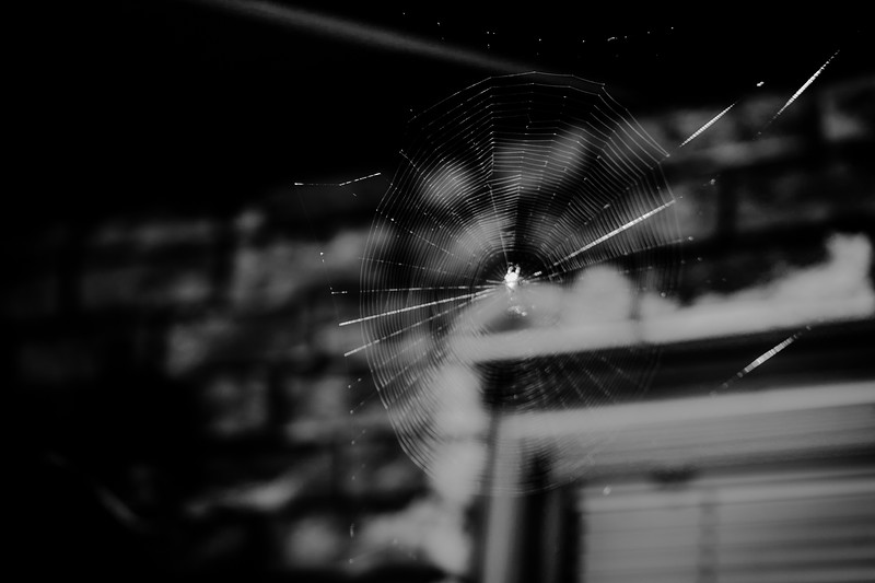 spider web inthe gardne bw  (1 of 1).jpg