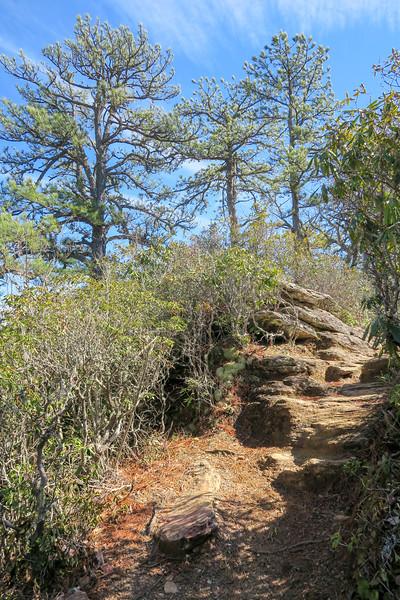 Bennett Gap Trail @ Overlook Rock -- 3,440'
