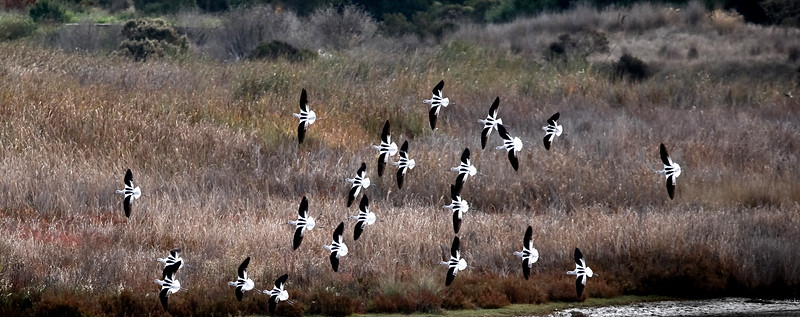 Michelle Yau_SCS_Birds in Fight (1).jpg