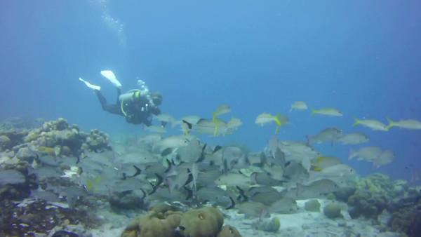Bonaire 2016