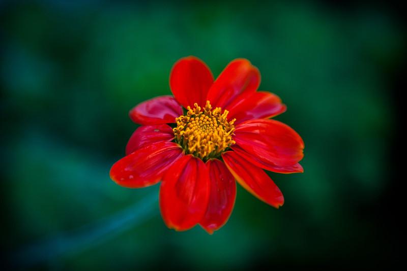 flower garden-42.jpg