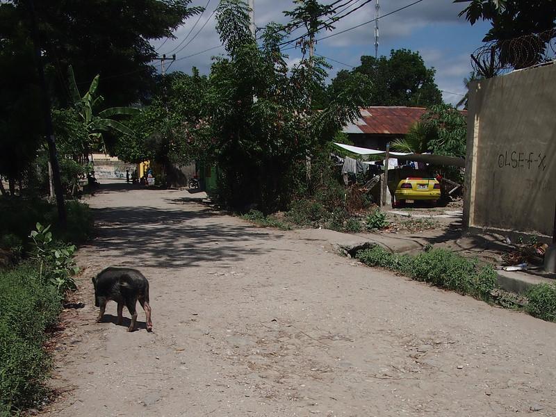 P5258846-street-pig.JPG
