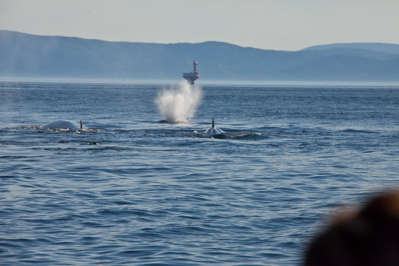 2011 quebec whale watching (39 of 80).jpg
