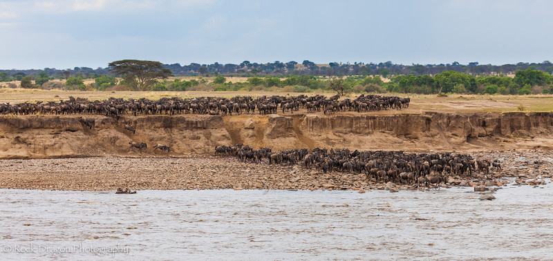 North_Serengeti-40.jpg