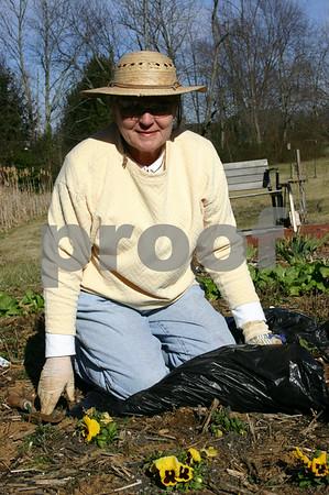 Gardening in January - January 2006