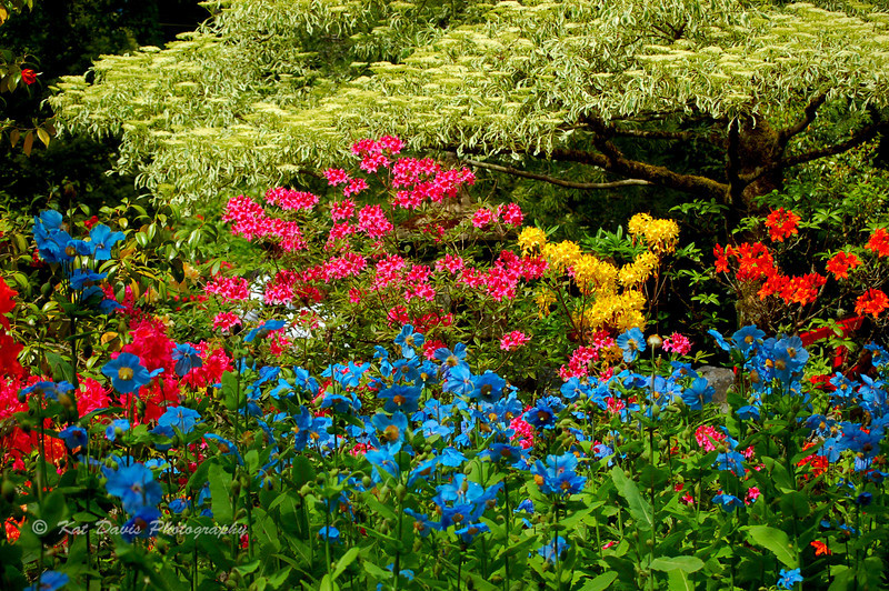 Bouchart Gardens, Victoria, Canada