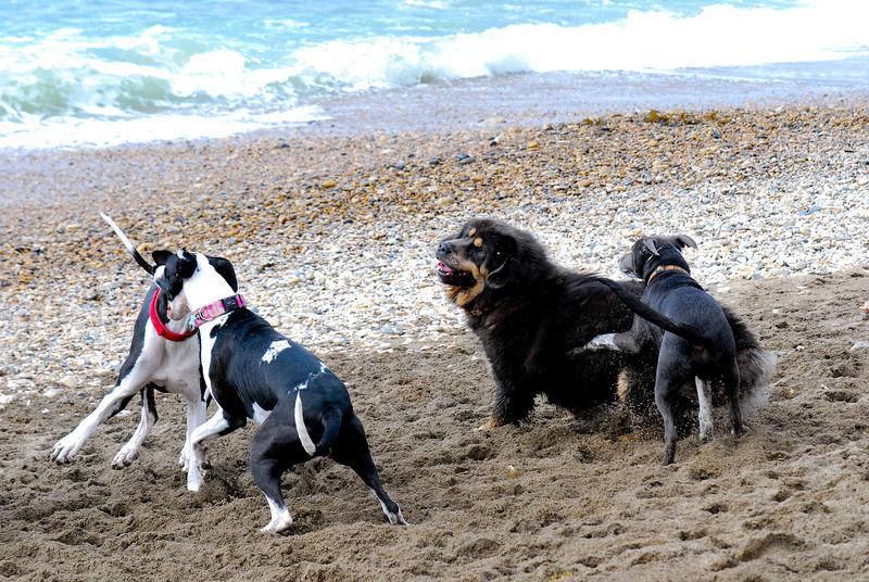 dogs_beach-027.jpg