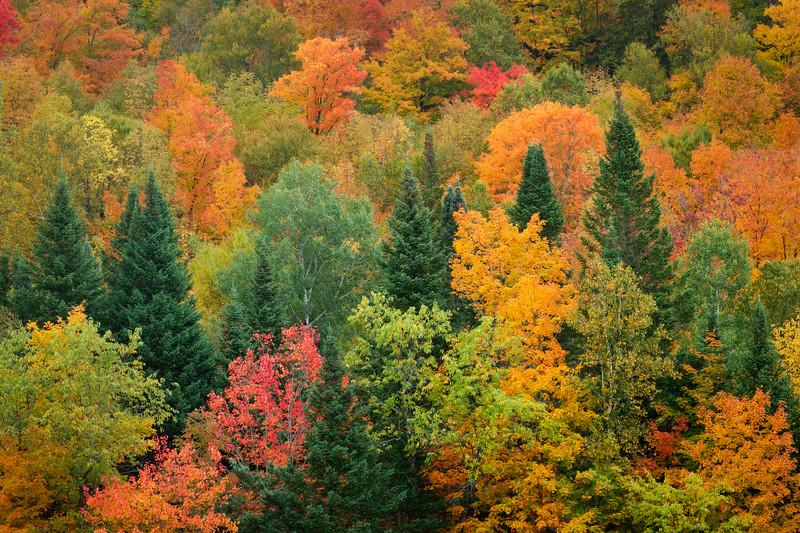 """""""Autumn Symphony of Color"""" Northeast Kingdom Vermont"""