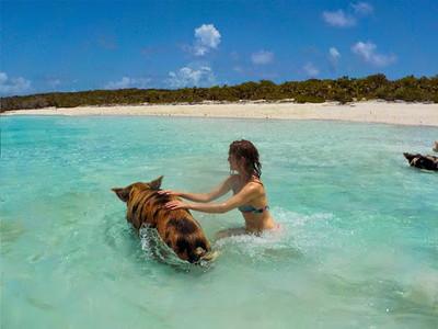 bahamas-swimming-pigs2.jpg