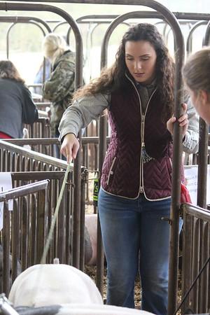 Shelby County Livestock Show scenes from Thursday, Feb. 28