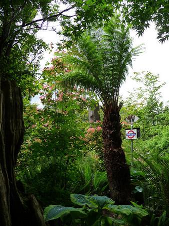 Tasmanian Tree Ferns
