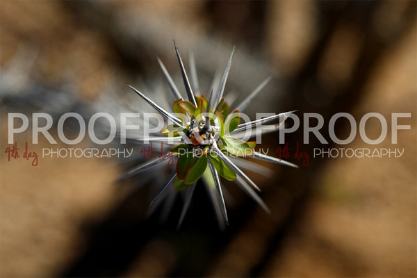 Product and Macro Photography