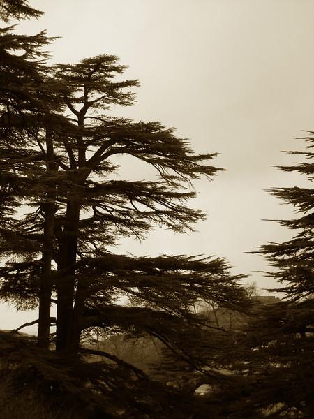 Lebanon 2008 223.jpg