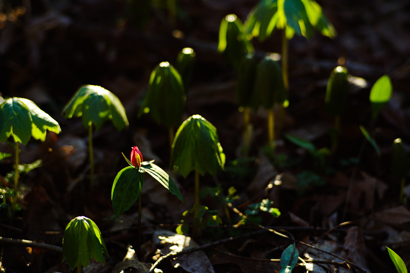 Backlit Groundcover
