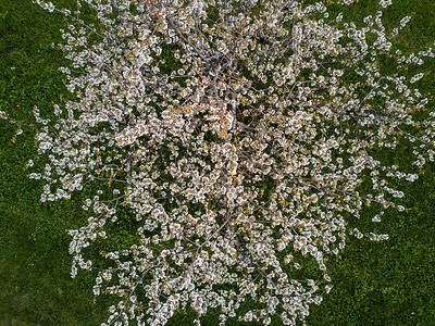 Blossom from above