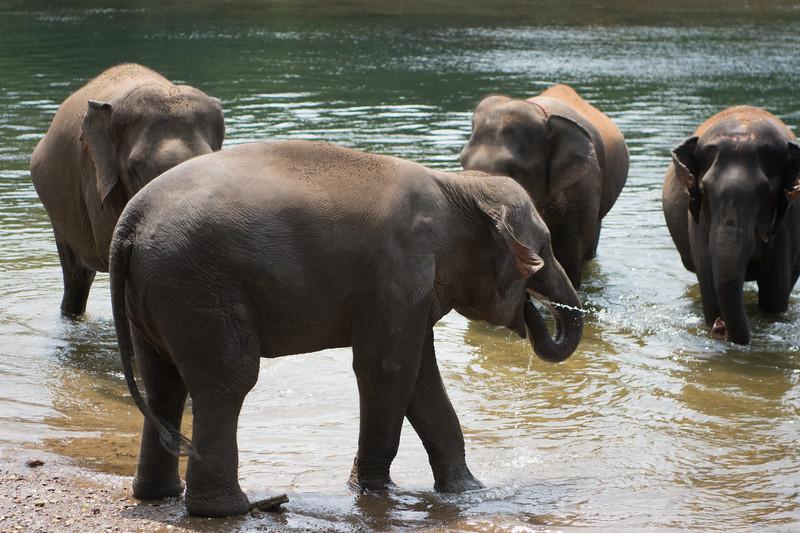 Bathtime on the River Kwai