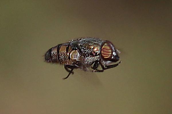 West Australian Ecology - macro photography