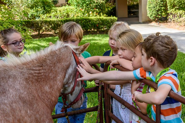 VBS - Petting Zoo