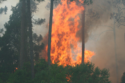 Gulf State Park Fire Sunday