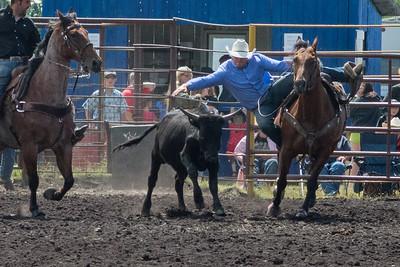 Steer Wrestling Sunday 2013