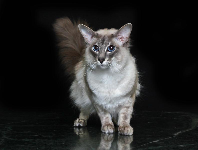Saule-cat-6.jpg