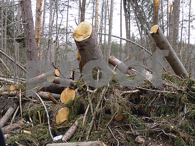 sites-designated-for-cherokee-county-storm-debris-collection