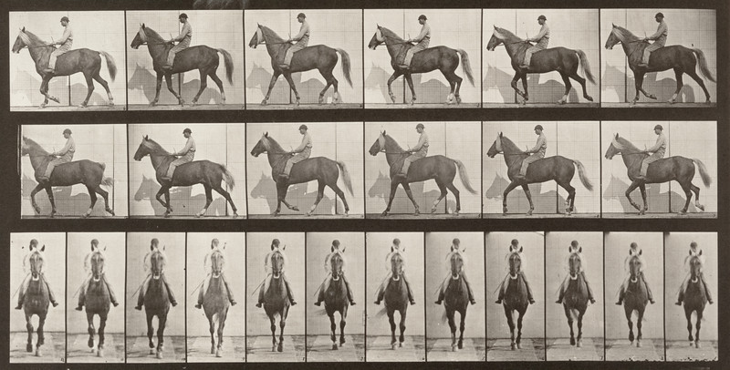 Horse Buckskin walking, lame right front foot, with rider (Animal Locomotion, 1887, plate 654)