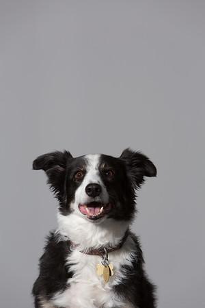19 OCt 2014 321 Dog Sessions (Public)