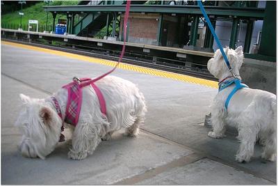 WESTIES ON TRAIN