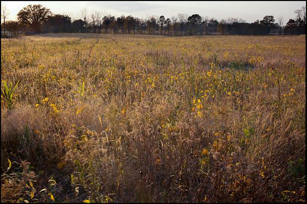 Rural Michigan