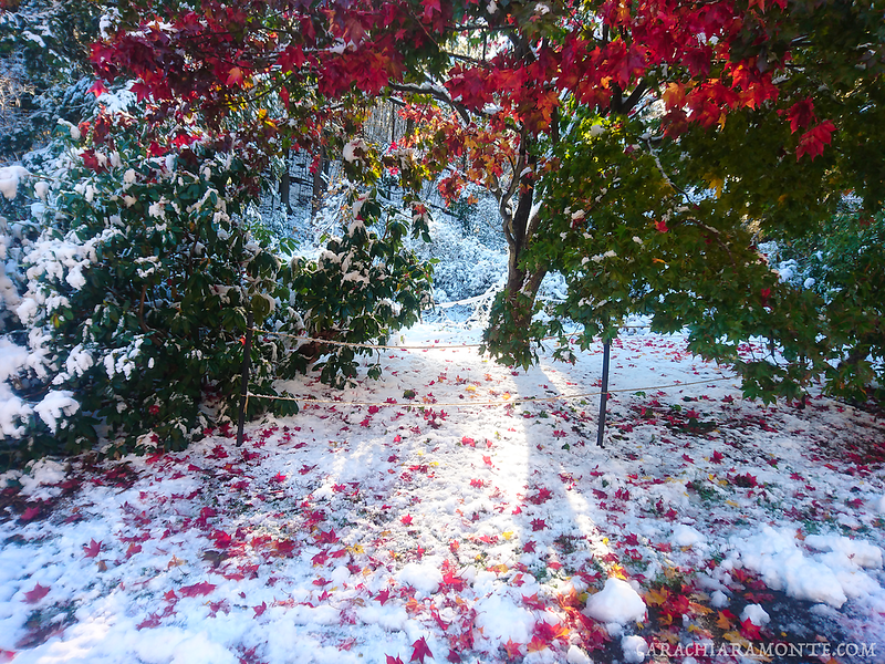 Fire trees snow wmk.png