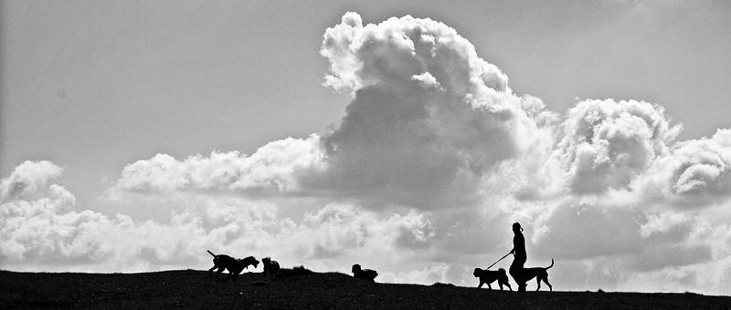 Dog Walking calendar.jpg