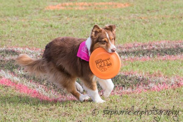 _MG_2504Up_dog_International_2016_StephaniellenPhotography.jpg
