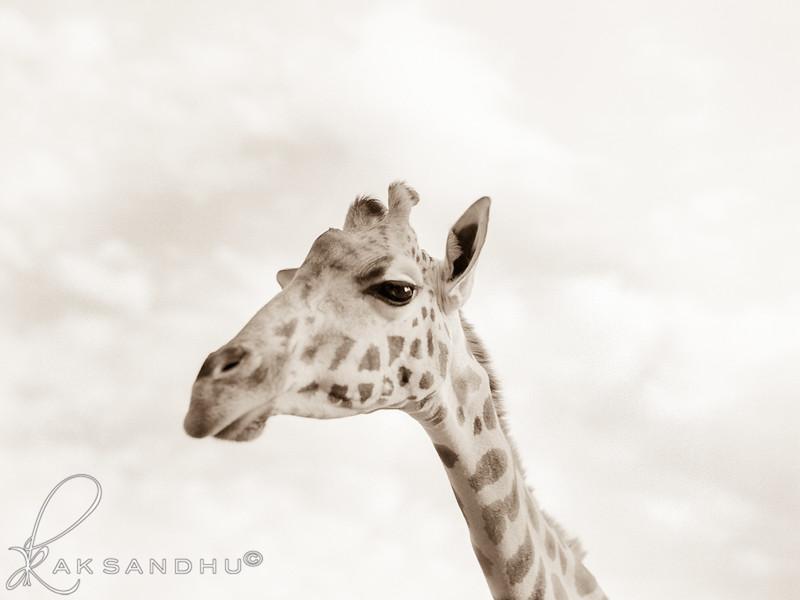 Safari-Africans-080.jpg
