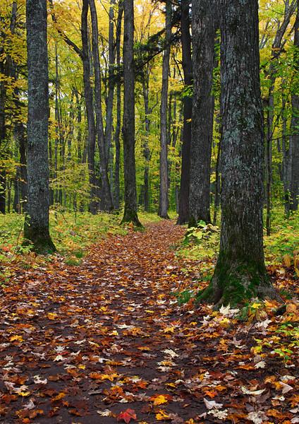 Fall Path - Ottawa National Forest (Upper Michigan)