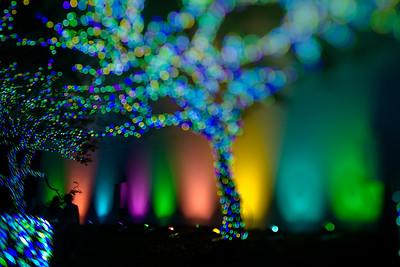 2014 Christmas Illumination