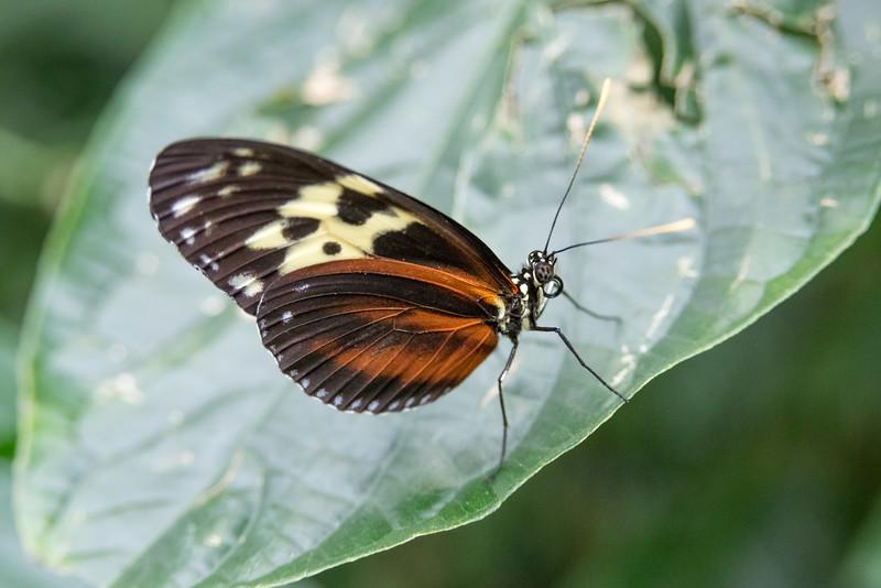 butterfly-181.jpg