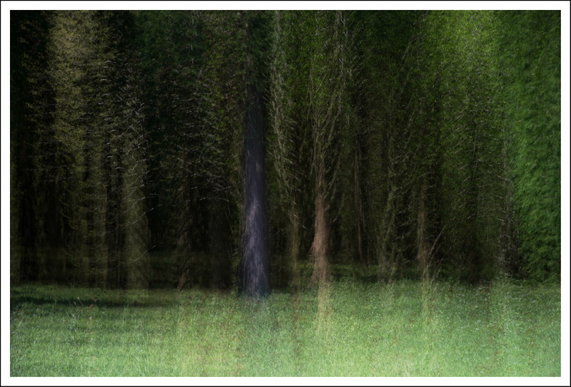 10 multiple exposures done in camera at the edge of the forest.