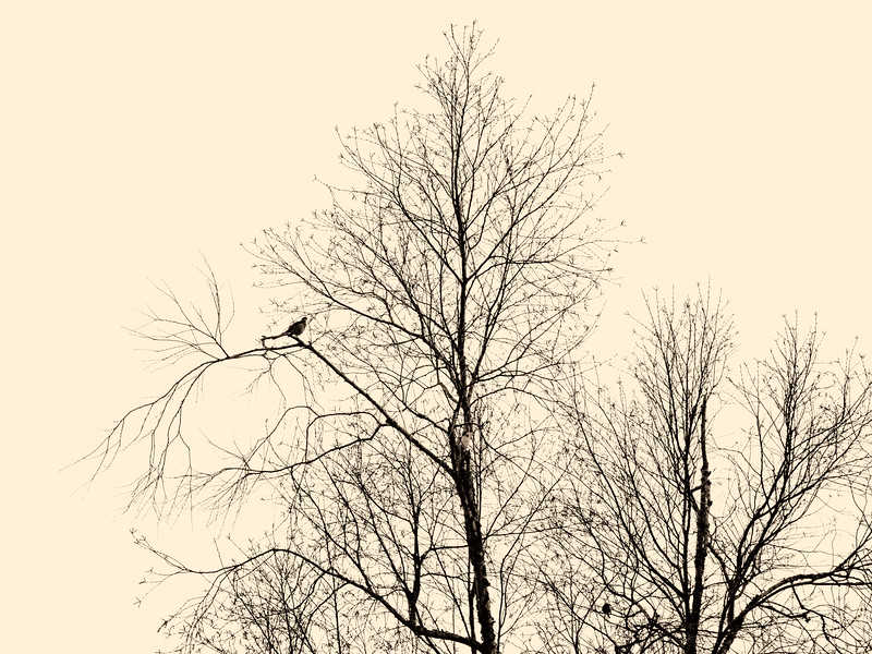 2019-12-06 Tree with bird PGX91041.jpg