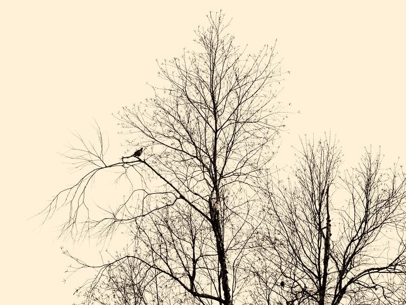 2019-12-06 Tree with bird PGX91041.jpg
