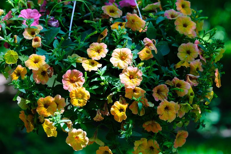 20170607 Flowers-9395.jpg