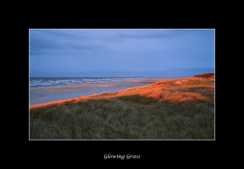 glowing-beachgrass.jpg