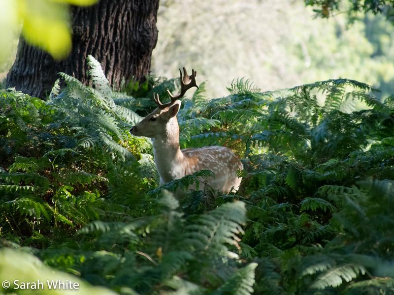 Deer rut_260915_640.jpg